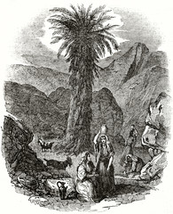 Old grayscale illustration of a date palm surrounded by rocks and ancient womens in Sinai Region, Egypt. By unidentified author, published on the Penny Magazine, London, 1835