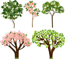 Set of different flowering fruit trees