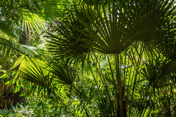 Tropical summer background - green exotic leaves