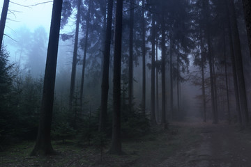 Creepy misty forest at night