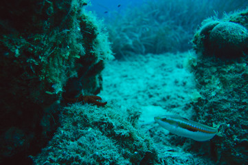 Underwater sea fish and star