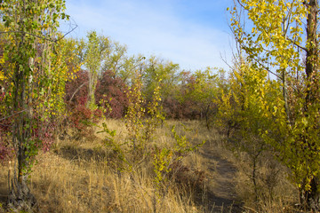 yellow and red autumn bushes