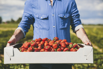 Man holding a box full of fresh strawberries