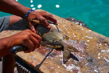 Poster Caraïben white grunt fish unwind in Caribbean