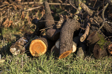 Firewood at countryside