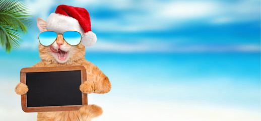 Cat relaxing in the sea background. Dog holds blank blackboard . Christmas.