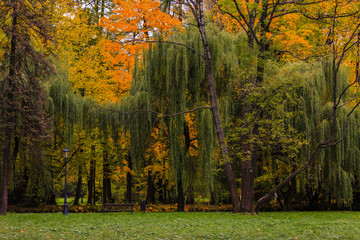 Golden autumn and colorful trees in the park.