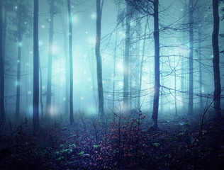Wall Mural - Fantasy abstract bokeh light in creepy blue saturated foggy forest landscape.