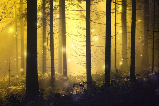 Fantasy firefly lights in the magic fairy tale foggy forest.