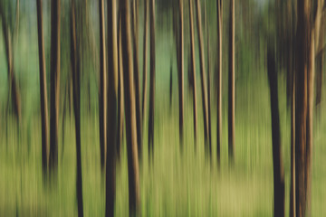 Motion blur of tree trunks