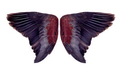 Wing feathers couple on white background