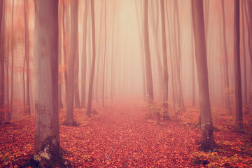 Autumn foggy mystical forest in red tones, nature background suitable for wallpaper