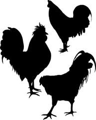 set of three chicken silhouettes on white