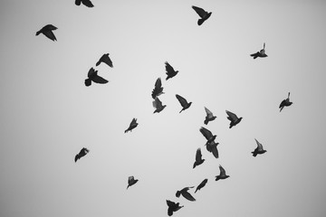 Silhouette of doves flying in the sky
