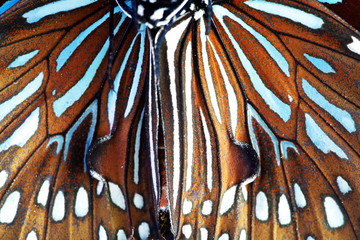 close up of beautiful butterfly wing as background