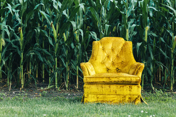 empty vintage chair in front of a cornfield