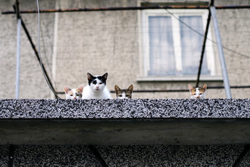 Cat family on roof