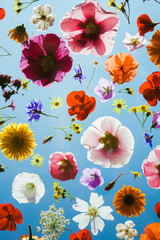 Blooming colorful flowers on blue sky background