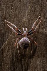 Tropical spider close up
