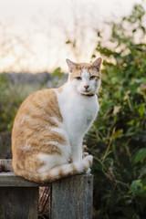 Cat portrait at sunrise