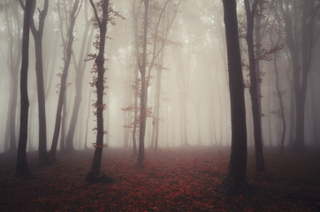 Mysterious red forest in autumn with fog