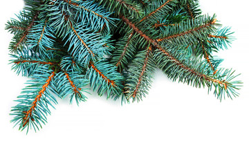 Beautiful natural Christmas fir tree branches and space for text  for Christmas card