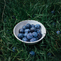 Damsons in the grass