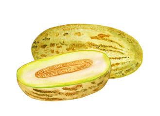 Watercolor melon and half of melon