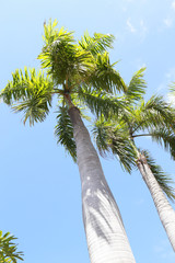 Relax in tropical paradise, below coconut palm tree