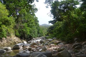 el rio pasa entre las rocas y la vegetacion