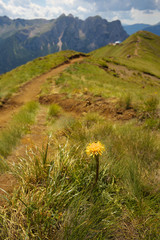 Yellow coltsfood with mountains on the background