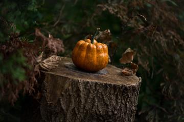 Pumpkin on Tree Stump