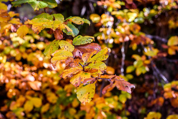 Colorful autumn scenery with tree leaves in a forest