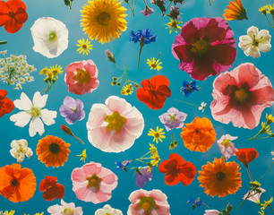 Blooming colorful flowers pattern background.