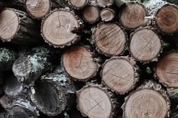 Wood logs gather moss