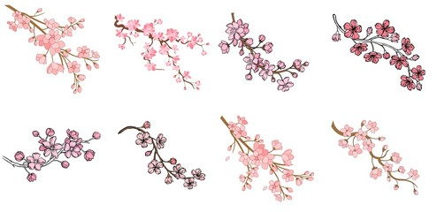 Set of branch of sakura with flowers and leaves on white background. Cherry blossom spring design. Vector illustration.