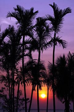 Tropical Sunset at Darwin Australia
