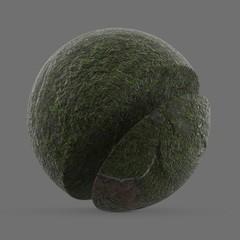 Low tide moss on rock