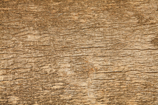 Tropical Tree Trunk Texture Background