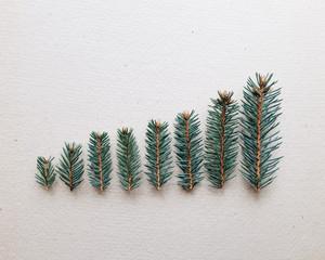 Miniature christmas trees.