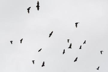 Bats flying away