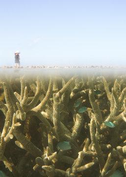 Reef walking in the Great Barrier Reef