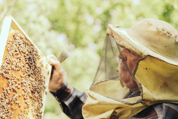 Senior Beekeeper Showing His Bees Honeycombs