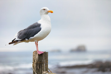 Seagull sitting on a post Wall mural