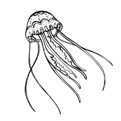 Jellyfish. Hand-drawn inhabitant of the underwater world