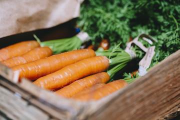 Carrots in organic vegetable garden box