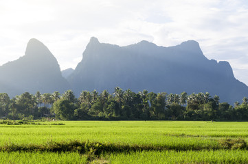 Green rice paddy field and limestone mountains in Vang Vieng, popular tourist resort town in Lao PDR.