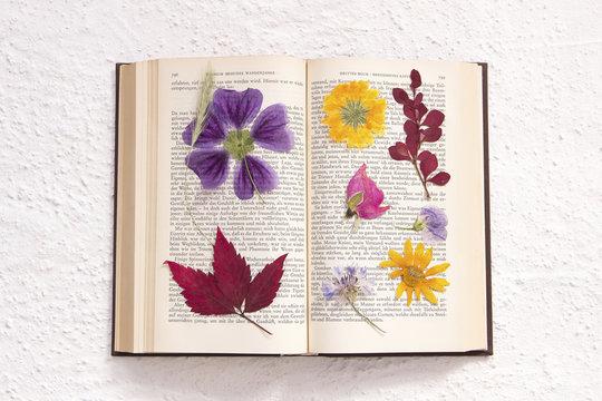 getrocknete Blumen in altem Buch (Goethe)
