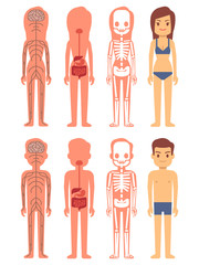 Male and female skeleton, digestive and nervous systems