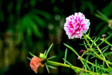 red light flower